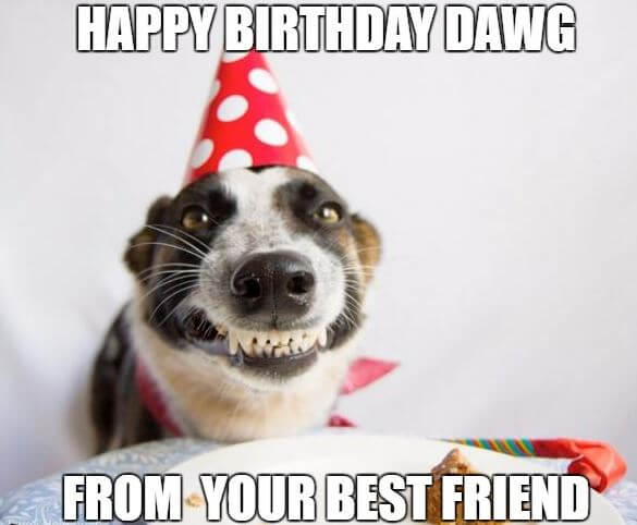75 Funny Happy Birthday Memes For Friends Family 2019