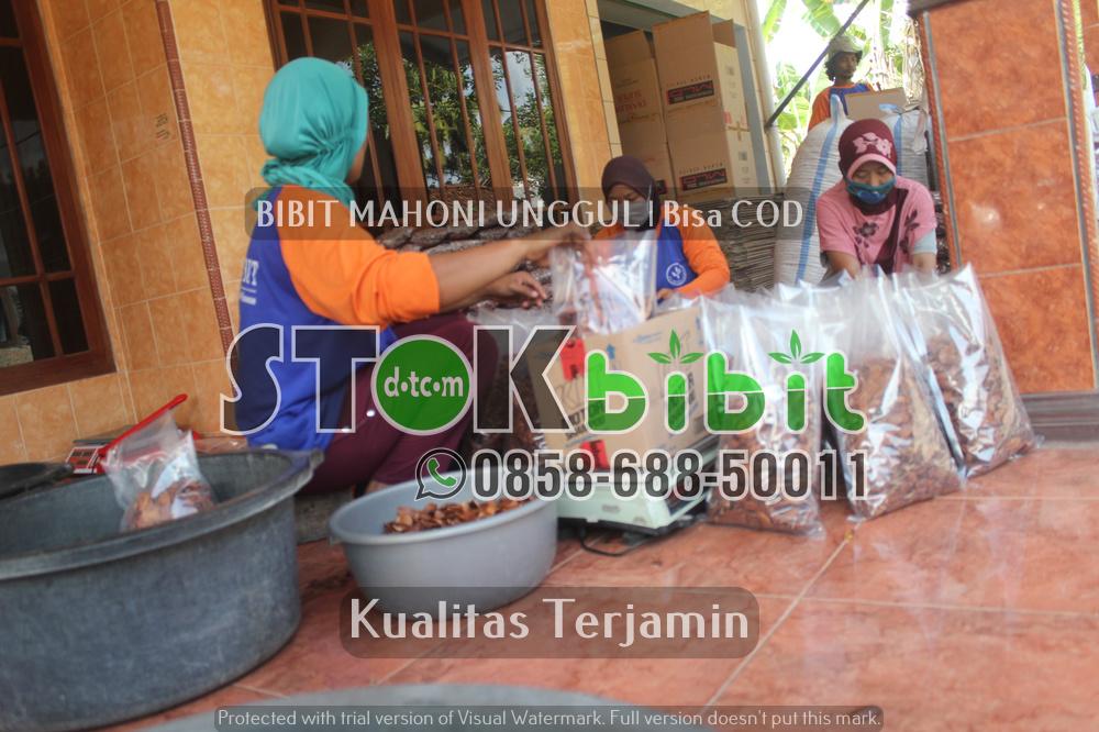 Hijaukan Bumi Nusantara Tercinta      Unggul     terjamin