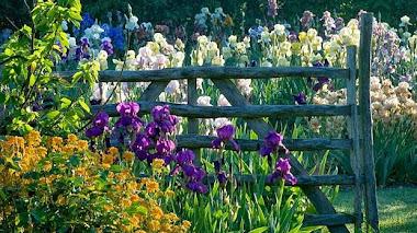 Plantas en Chelsea. Iris Benton rescatados por Sarah Cook