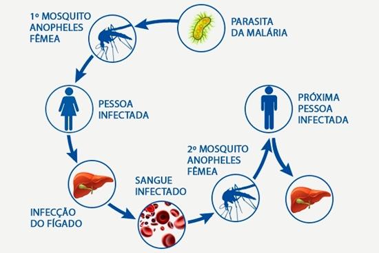 Malaria Ciclo