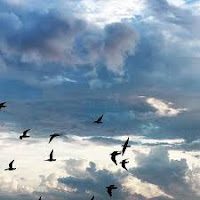 【原創】693《海雨》/現代詩 - 沧海一粟 - 滄海中的一粒粟子