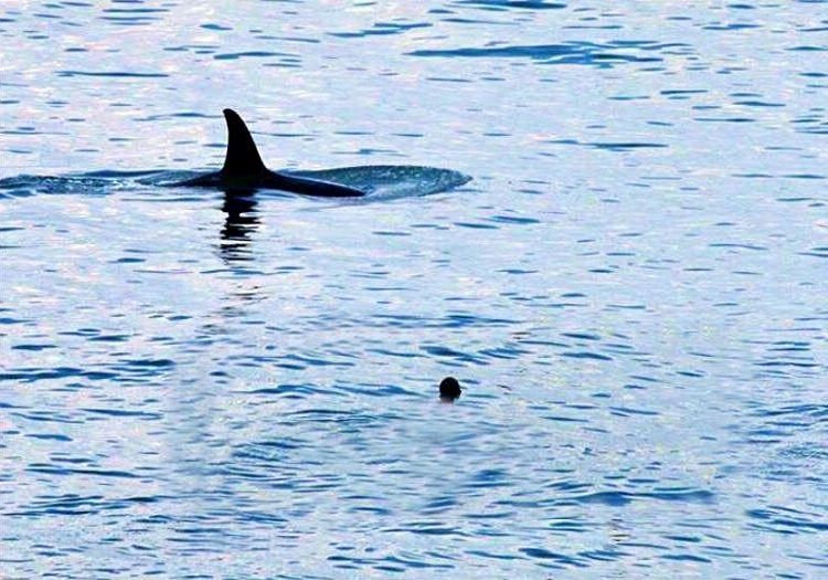 Köpek balıklarıyla yüzmek en son istediği şeydi ama en nihayetinde bu da başına gelmişti.
