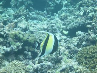 Ilot Coco - Seychelles