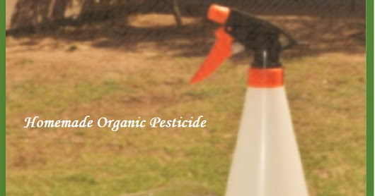 How to Make Natural Home or Organic Pesticide?