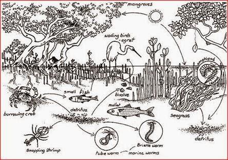 Dapur Bio Ekosistem Air Payau