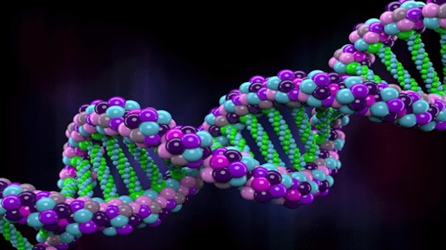 Scientists  Are Going To  Create  The  Largest  Gene Bank In USA