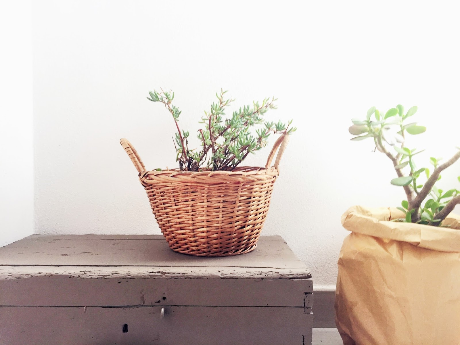 Blog arredamento idee per arredare part 5 - Sacchi di terra per giardino ...