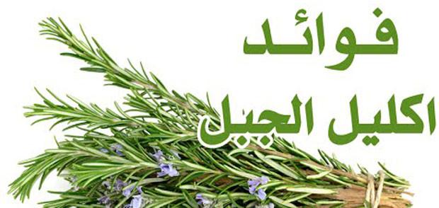 الصحة - ما لا تعرفة عن عشبة إكليل الجَبل  إكليل الجَبل هي عشبة  معروفة علمياً باسم (Rosmarinus officinalis) وهي من اكثر الاعشاب المعمره