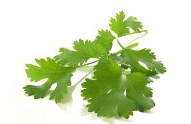 manfaat daun seledri untuk kesehatan ginjal