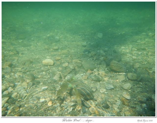 Walden Pond: ... deeper...