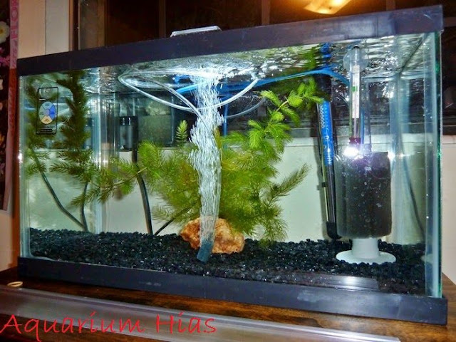 Gambar Filter Aquarium Air Tawar Yang Baik Dan Berukut Cara Memilih Serta Kerjanya