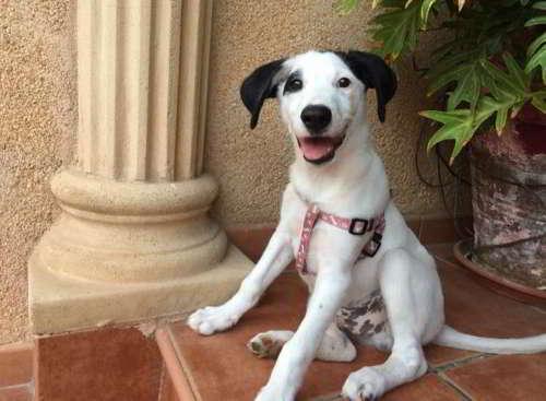 cachorro talla mediana