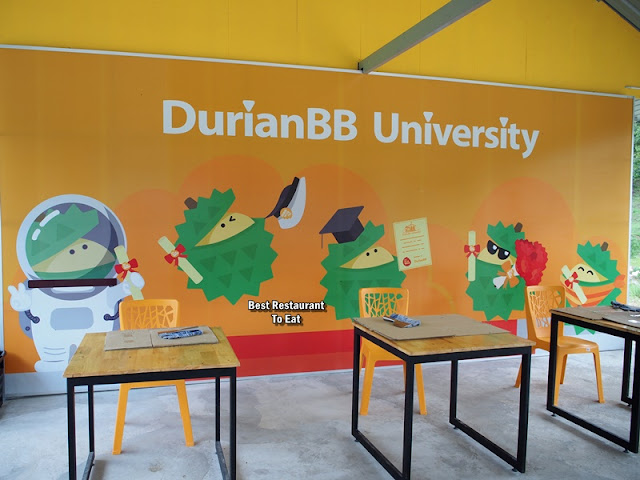 DurianBB University - Raub Pahang Durian Farm Education Tour