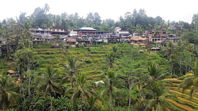 Riceterraces Bali