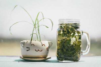 تعرف على فوائد استهلاك الشاي الأخضر