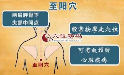 至陽穴位 | 至陽穴痛位置 - 穴道按摩經絡圖解 | Source:xueweitu.iiyun.com