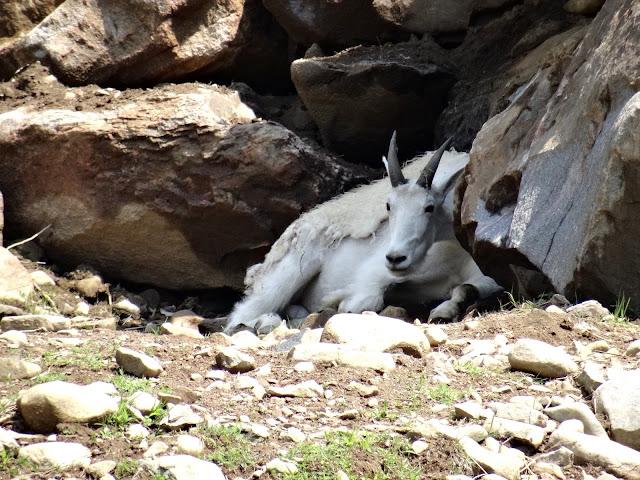 park omega goat