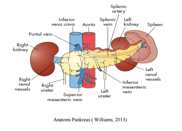 Gambar anatomi pankreas