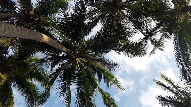 Palm trees at Cua Dai beach, Hoi An