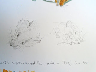 Wood mouse pencil studies