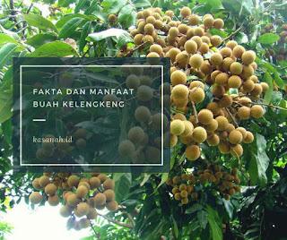 buah kelengkeng
