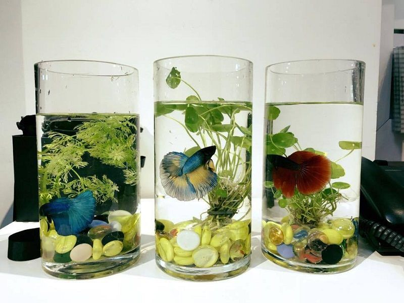 The Toxic Plants for Betta Fish Cover Up Image
