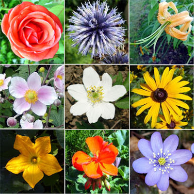 All Things About Various Kinds of Flowers. - Life Is Beautiful