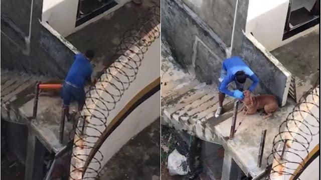 Vídeo: homem é flagrado maltratando cachorro e obrigando-o a comer as próprias fezes