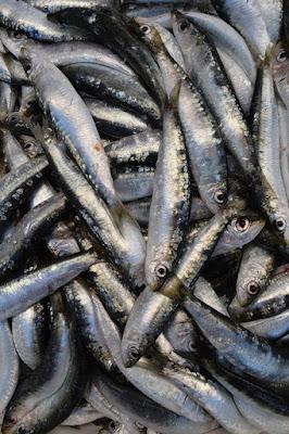 Sardines fraîchement pêchées