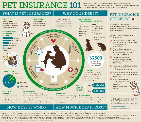 Pet Insurance That Covers Routine Visits