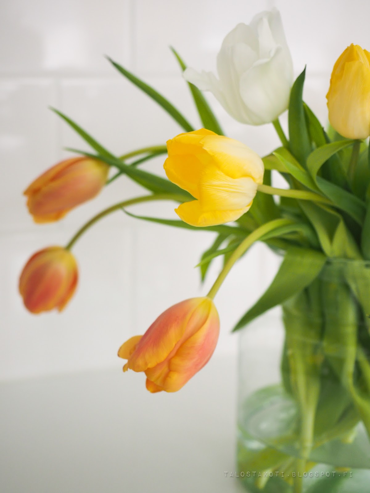 tulppaanit, arvonta, sisustusblogi