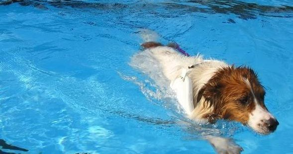 Do Dogs Know How To Swim Naturally