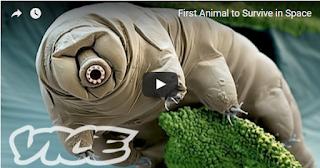 ما هو أقوى حيوان على وجه الأرض؟