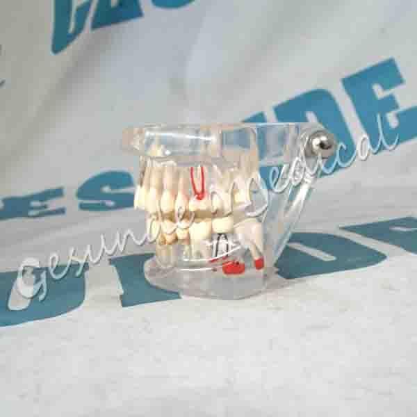 grosir torso gigi manusia