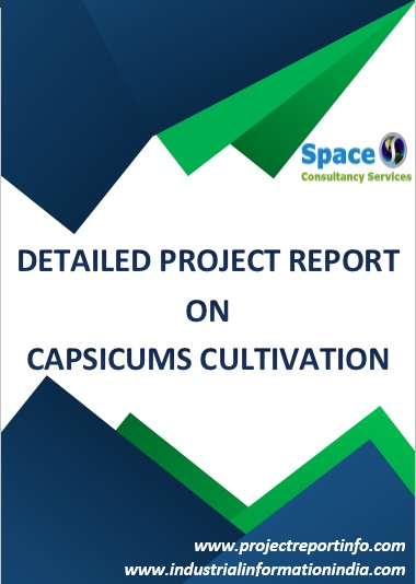 Project Report on Capsicums Cultivation