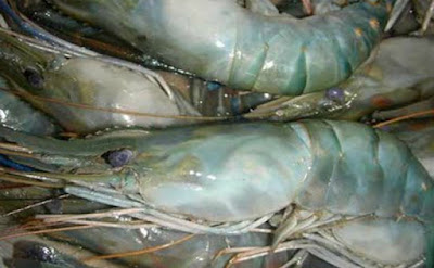 Exporting and Importing Black Tiger Shrimp Wholesale