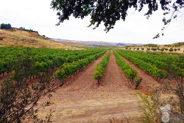 Vinos de Madrid y la pisada de la uva en las Bodegas Señorío de Val Azul