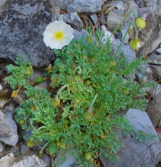 flore sauvage en suisse (et jardins botaniques)