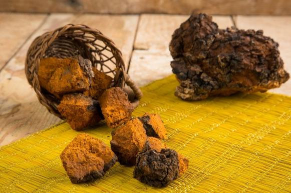Bổ sung chất dinh dưỡng từ nấm Chaga Nga