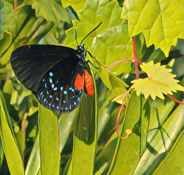 Atala Butterfly at Long Key Nature Center in Davie, FL