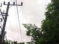 Perlunya Kordinasi Departemen Perkabelan Dan Departemen Penanaman Pohon Pinggir Jalan