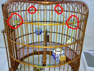 Tips Agar Burung Tidak Salto - Perawatan Burung Yang Salto