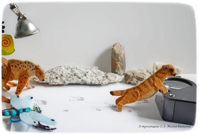 пальчиковые игрушки- гепард - сурикат - стрекоза