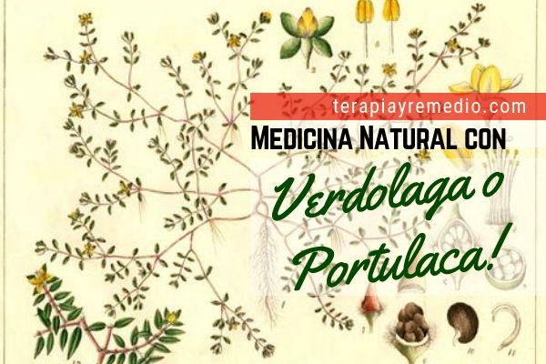 La verdolaga en medicina natural tiene muchos preparados, aquí te contamos algunos de ellos