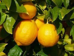citrom és uborka ananász a fogyáshoz