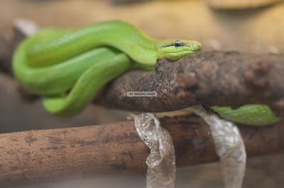 Ark Avilon Zoo - Snake