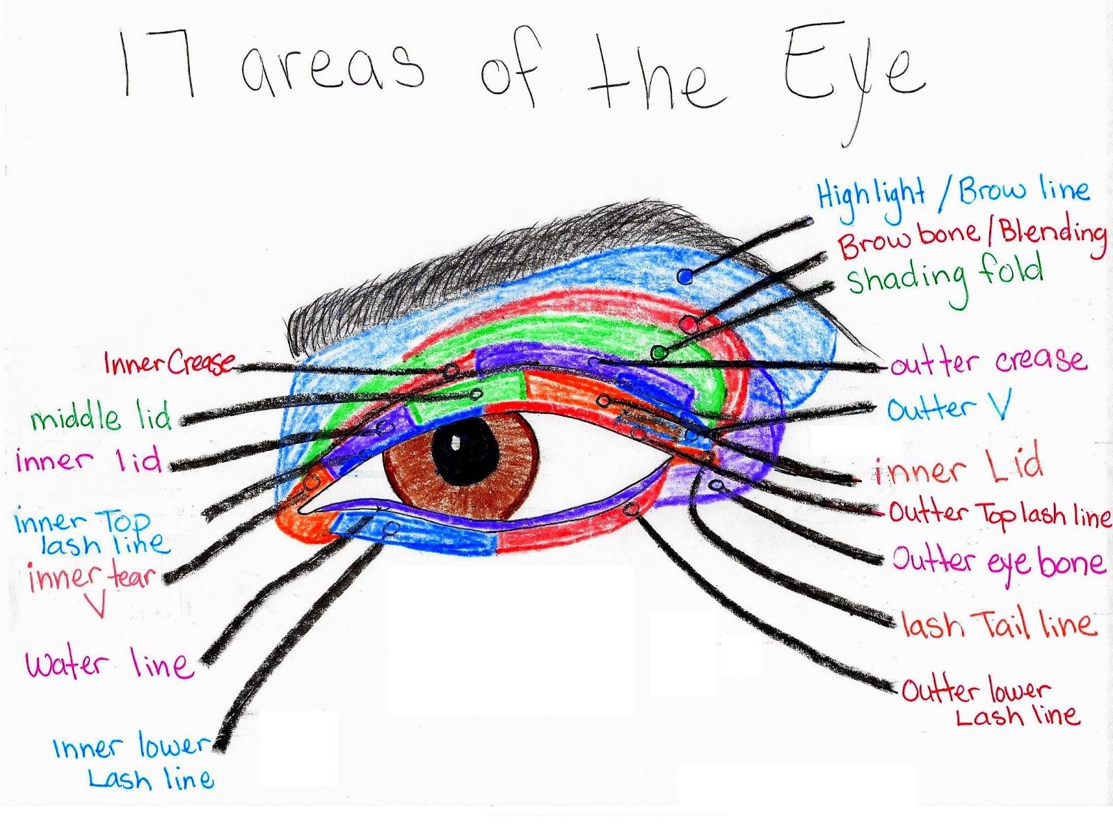 Pure Makeup Fun With Hannah  Eye Makeup Diagrams