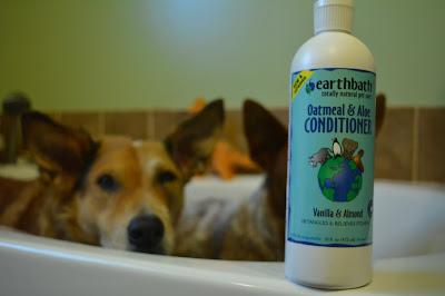 dogs in bathtub