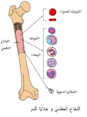 3 - بحث حول تركيبة الدم
