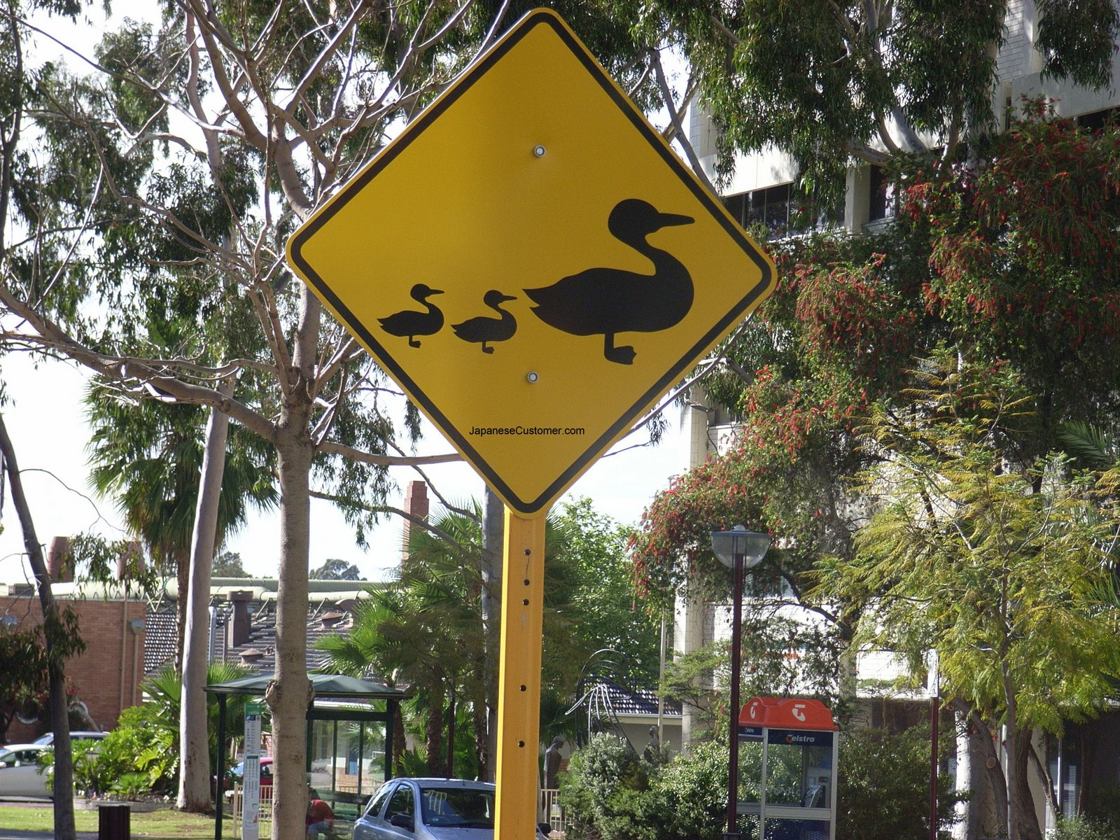 Suburban street scene, Australia Copyright 2006